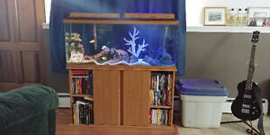 55 gallon saltwater aquarium and stand with 4 fish included