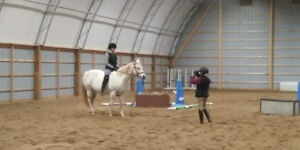 Looking for basic horse skills? Occasional fun lessons?
