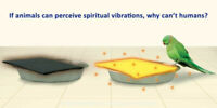 If Animals Can Perceive Spiritual Vibrations, Why Can't Humans ?