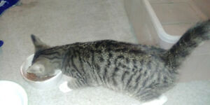 5month year old kittin for rehome