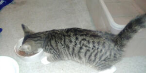 5month old kittin for rehome