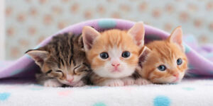 WANT: looking for a kitten:)