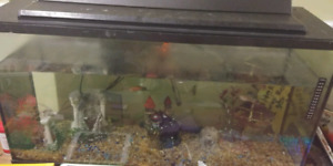 40 or 50 Gallon tank for sale with all accessoires