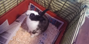 2 lapins a donné Lévis
