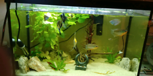 Assorted fish for sale