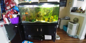 60 gal tank stand and decorations