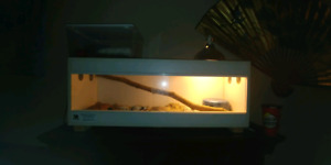 Snake enclosure for sale everything included