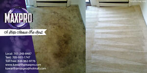 Professional Pet Stain and Urine Removal