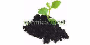 ---Red Wigglers Vermcompost Starter Kit --- Cambridge Kitchener Area image 2