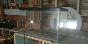 Lots of aquariums and reptile accessories
