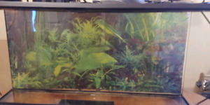 3x1.25x1.5 ft ExoTerra Reptile Tank with Lighting Gear $210