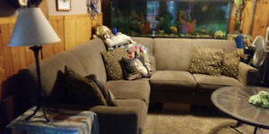 Gray. Couch