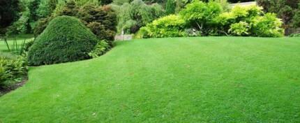 Regular Lawn mowing