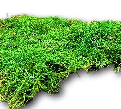 konserviertes Moos kaufen Moosmatten Moosplatten Moss Deko Moosmatte Moosplatte