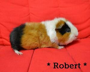 """Adult Male Small & Furry - Teddy: """"Robert"""""""