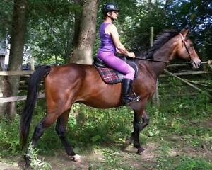 """Adult Male Horse - Thoroughbred: """"Parker"""""""