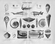 Antique Shell Prints