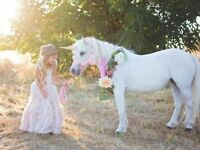 Designer Birthday Party Packages! Unicorn & Fairy Parties!