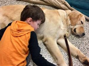 family with therapy dog looking to rent in ormocto school distri
