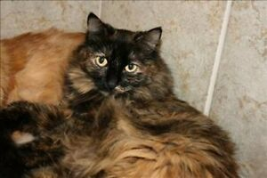 Good mouser, affectionate and friendly