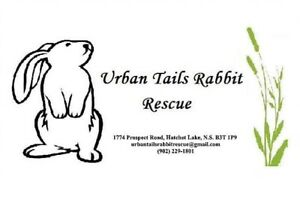 Rabbit Rescue - Spots available for rescues!