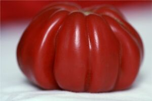 heirloom *zapotec* tomato 10 seeds