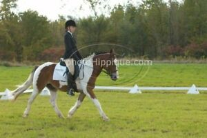 Demi pension /part board on a large pony schoolmaster