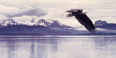 BALD EAGLE ART PRINT - Silent Quest by Daniel Smith Wildlife Bird Poster 16x20