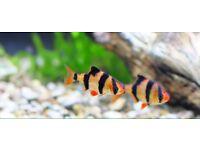 Tropical Fish Bundle