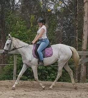 Kind, Gentle Senior Stockhorse Mare