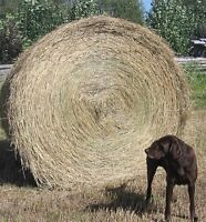 Hay--1300 lb Round Bales --various quality