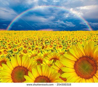Gordy's Rainbow