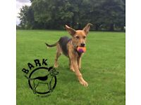 Bark St.Albans, dog walking, pet sitting, fully insured, canine first aid trained.