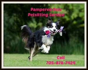 Pampered Pets!  - Cat, Dog and Horse Sitting Services Kawartha Lakes Peterborough Area image 1