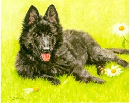 Belgian Shepherd Groenendahl Limited Edition Puppy Art Print What