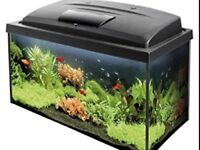Fish tank included 2 fishes plus FREE one more fish tank