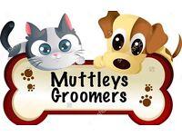 Muttleys Dog Groomers