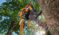 TREE REMOVAL.  647-607-4924.....20% OFF NOW..