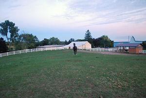 Outdoor Horse Board Available Belleville Belleville Area image 4