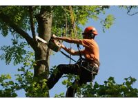 Tree surgery and maintenance