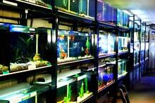 MOVING SALE, SALE, SALE, WINDSOR FISH HATCHERY South Windsor Hawkesbury Area Preview