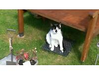 MISSING CAT. 'MILO' MALE BLACK & WHITE