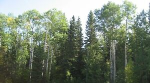 Forested Land in either Red Deer or Lacombe County