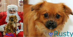 Pekingese mix looking for his furever home!
