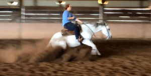 Horse Training in the Maritimes