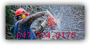 Professional tree service,removal and stump grinding.