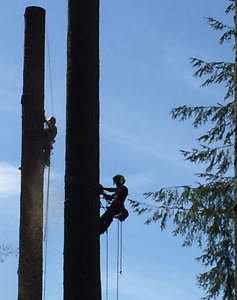 Chainsaw Operator/ Timber Construction Comox / Courtenay / Cumberland Comox Valley Area image 10