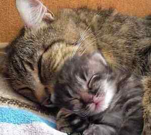 HAVE A PREGNANT CAT? DON'T KNOW WHAT TO DO? Perth Perth City Area Preview