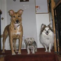 Dog Sitting - Rick and Jan's Overnight Pet Sitting Service