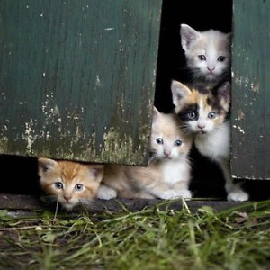 Barn kittens needed.